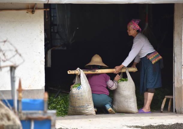 Nel profumo di caffè dello Yunnan