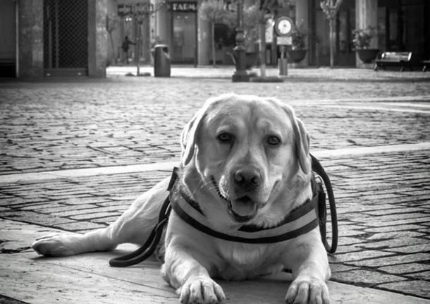 Solo come un cane (foto di Emanuele Santagostino)