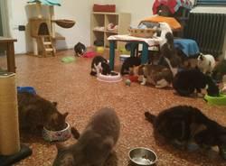 rifugio gatti