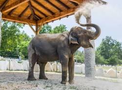 elefante safari park