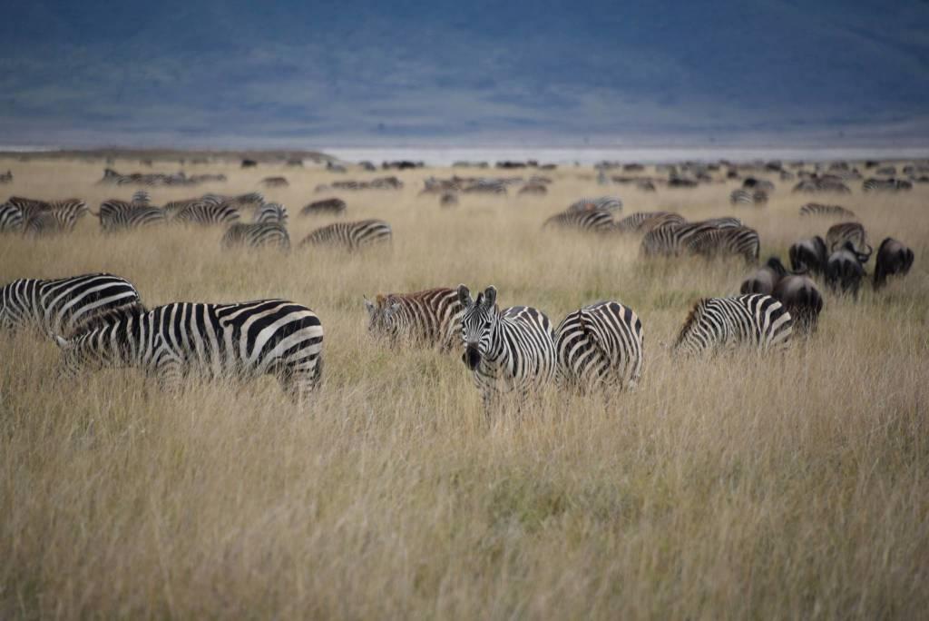 In viaggio col mercante, Tanzania. Parte 1