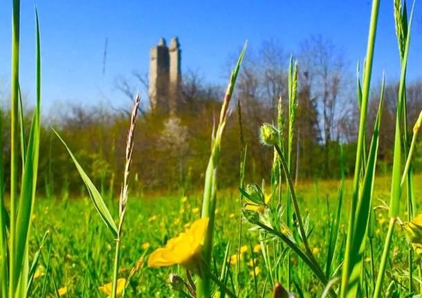 La torre di Velate