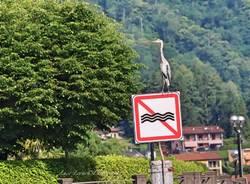Lavena Ponte Tresa, airone - foto di Luca Leone