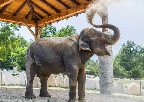 maya elefante zoo safari