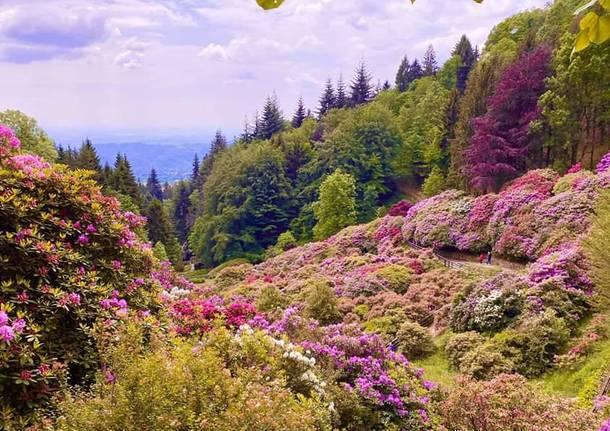 oasi zegna fiori