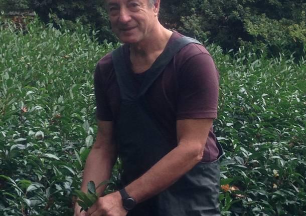 La piantagione del té del Verbano