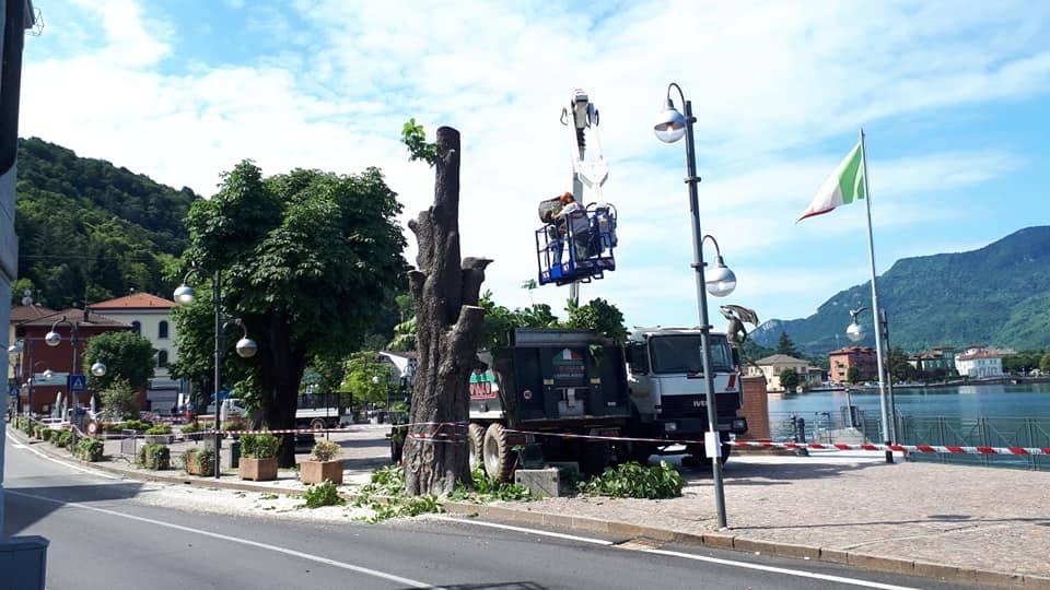 Porto Ceresio - Abbattimento ippocastani piazza Bossi