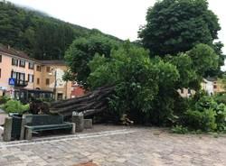 Porto Ceresio - Ippocastano