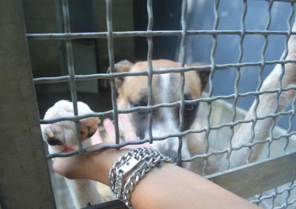 Protezione Animali Legnano