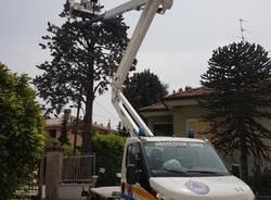 Protezione civile recupera uno sciame di api