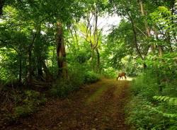 cerbiatto del Bosco WWF di Vanzago