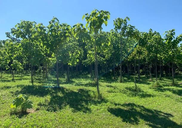 Samarate - Nove alberi per ricordare le vittime di Samarate nell'epidemia Covid - Gallarate/Malpensa - Varese News