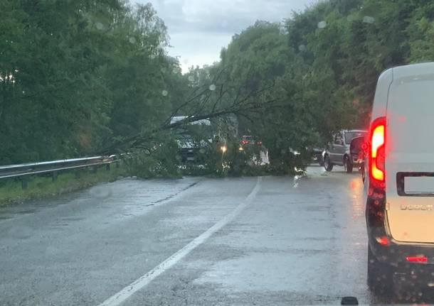 Gavirate - Violenta grandinata sul Varesotto: incidenti e alberi caduti - - Varese News