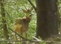 Alla scoperta della fauna del Parco Pineta: Massimo racconta la sua passione per la natura