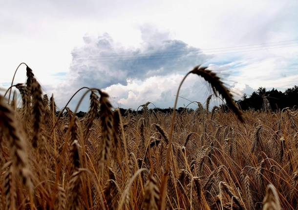Campi di grano e temporale