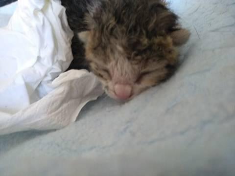 Abbiamo trovato un gattino abbandonato