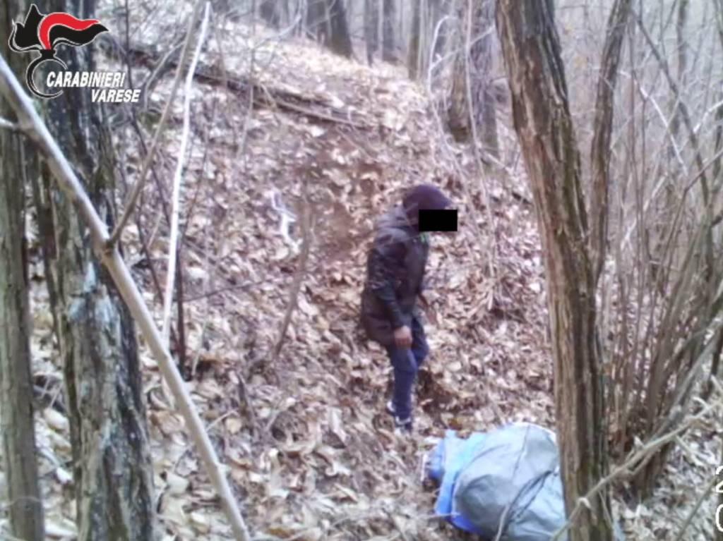 L\'operazione antidroga nel boschi fra il Tradatese e il Comasco