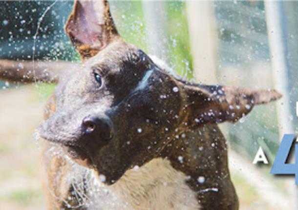 CalENPArio 2021: Enpa Saronno aspetta le foto dei vostri animali