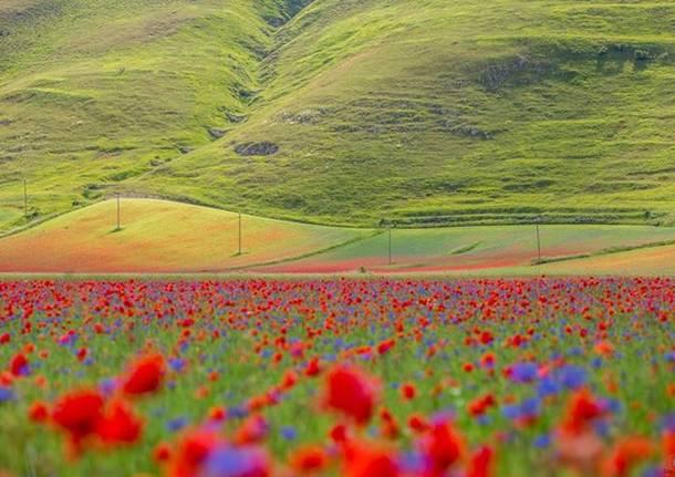 I colori delle fioriture da Castelluccio di Norcia