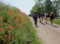 La Via Francisca - 135 chilometri a piedi tra natura, arte e bellezza