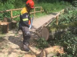Parco delle Groane: volontari al lavoro per liberare i sentieri dagli alberi abbattuti dal nubifragio