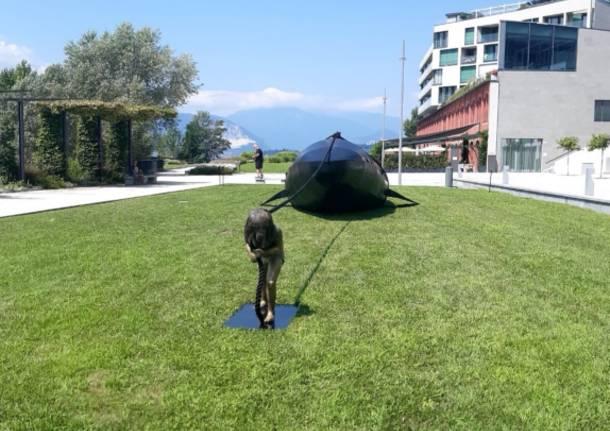 Una balena sul lungolago di Laveno