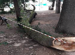 Ramo caduto - parco viale Gorizia 3 agosto