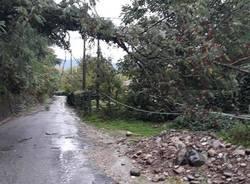 albero caduto castelveccana