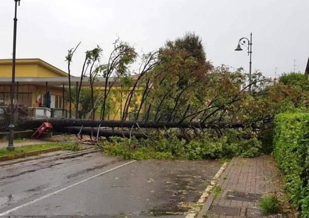 albero caduto scuola rosmini tradate