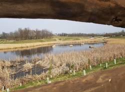 Bioblitz Parco Lura 2020