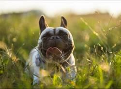 Cislago, un servizio fotografico professionale per cani per raccogliere fondi per gli animali abbandonati