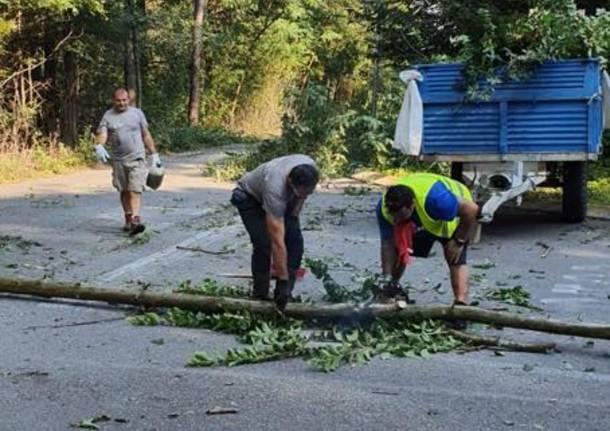 Cogliate/ Misinto: volontari ripuliscono la strada da erbacce e rifiuti