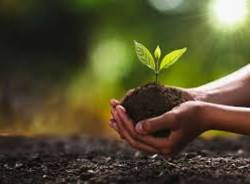coltivare- agricoltura- piantare- ambiente