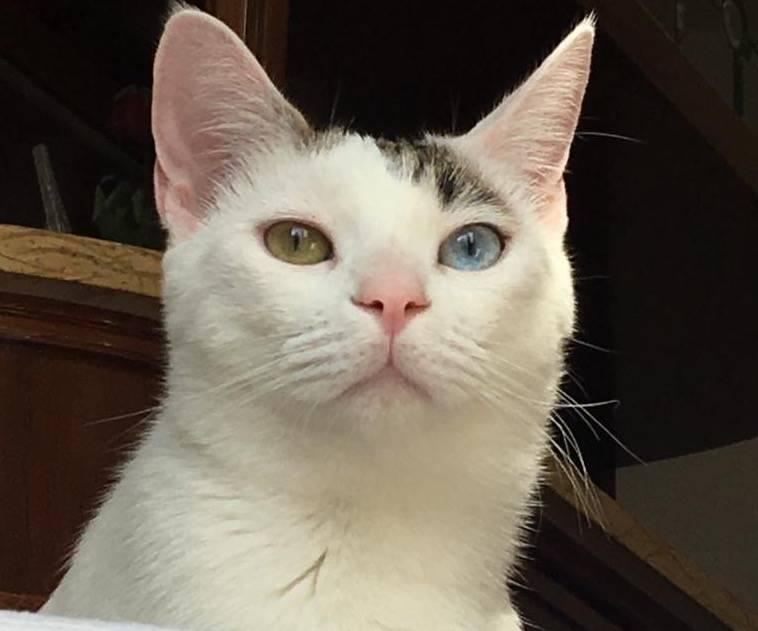 gatto smarrito - juanito