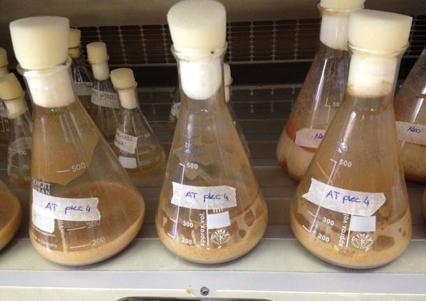 Insubria Biotech Week