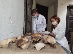 Osteoarcheologi e paleopatologi dell'UNiversità dell'Insubria