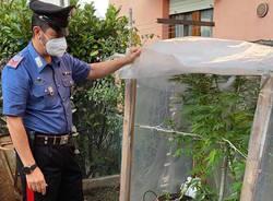 sequestro serra marijuana laveno mombello