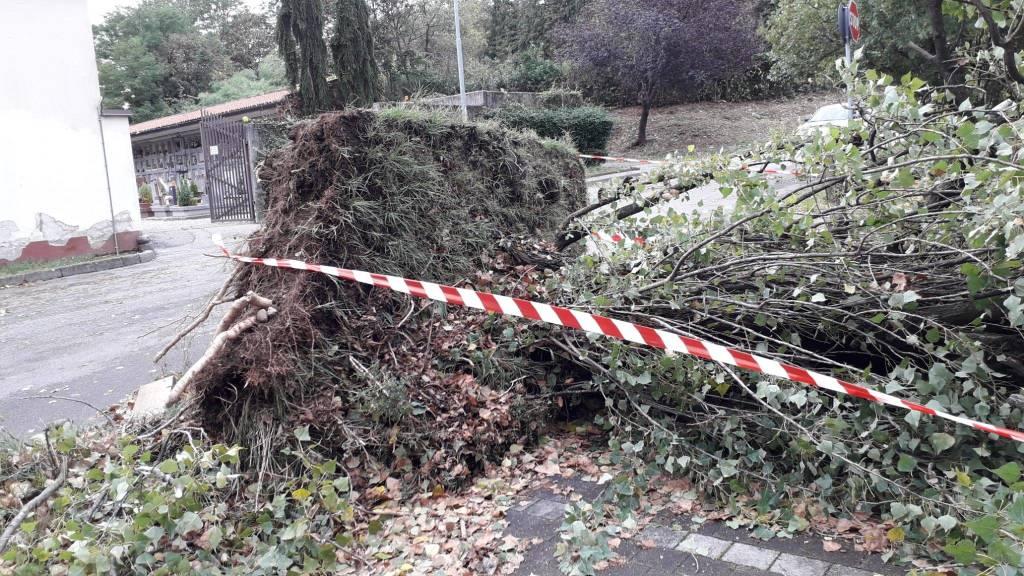 Varese, Alberi caduti per il maltempo a Bizzozero
