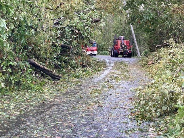 Alberi caduti, strada chiusa tra Brissago Valtravaglia e Roggiano