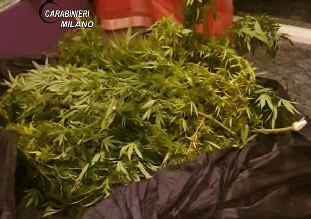 Canegrate, arrestate tre persone dai Carabinieri per detenzione di sostanza stupefacente