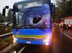 Cervo contro autobus in Valganna