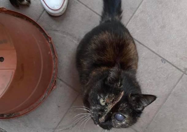 gatta scomparsa