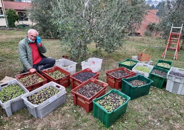 L'abbondante raccolta dell'olio di sant'Imerio
