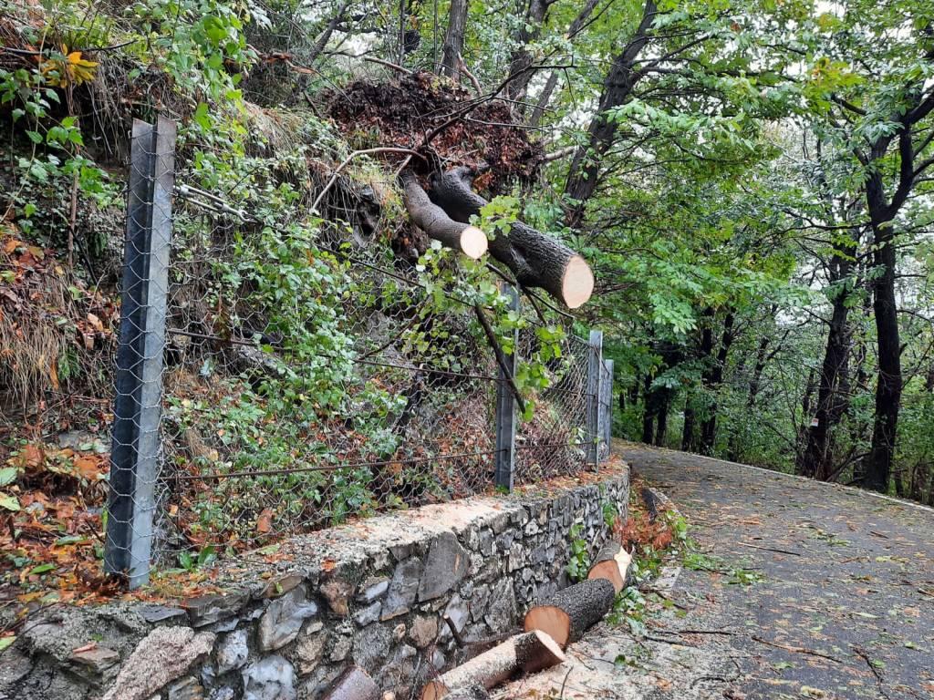 Maltempo: Alberi caduti al Campo dei Fiori