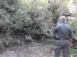 Parco delle Groane: volontari al lavoro nel fine settimana per rimuovere gli alberi abbattuti