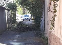 San Vittore Olona albero caduto