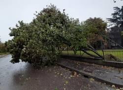 Vento e danni a Legnano 3 ottobre