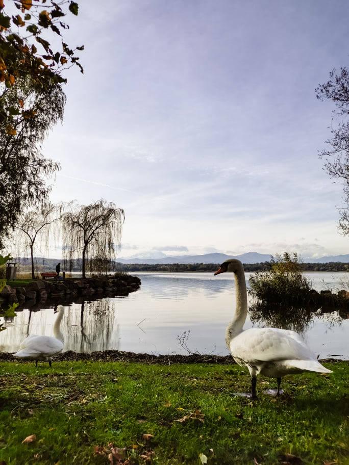 Vista sul Lago di Varese