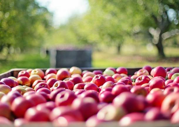 agricoltura mele coldiretti foto da pixabay