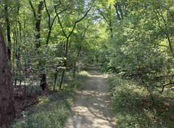bosco Cardano al Campo